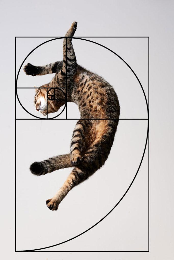 composicion-gatos-secuencia-fibonacci-9